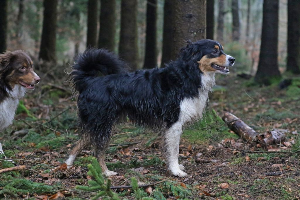 HundefreundeJan201815