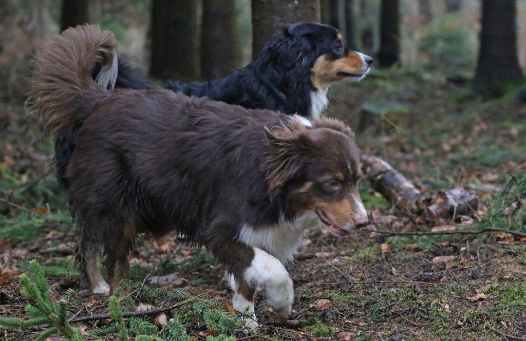 HundefreundeJan201816