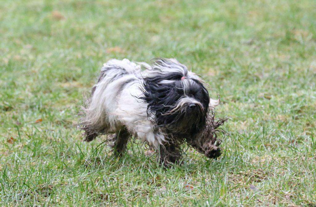 HundefreundeJan201820