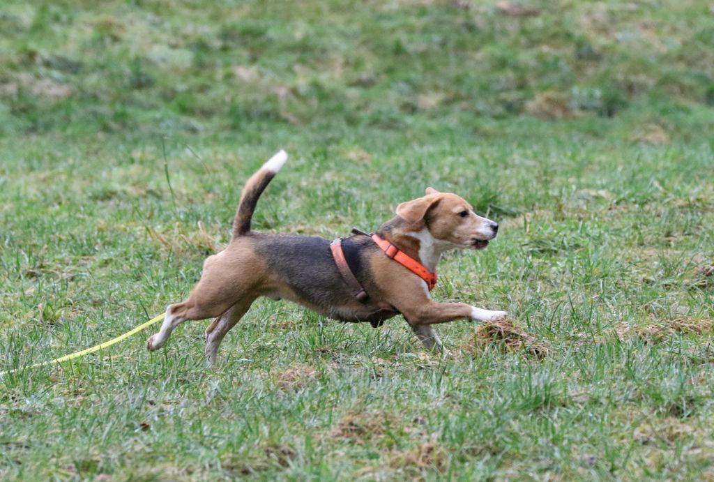 HundefreundeJan201823