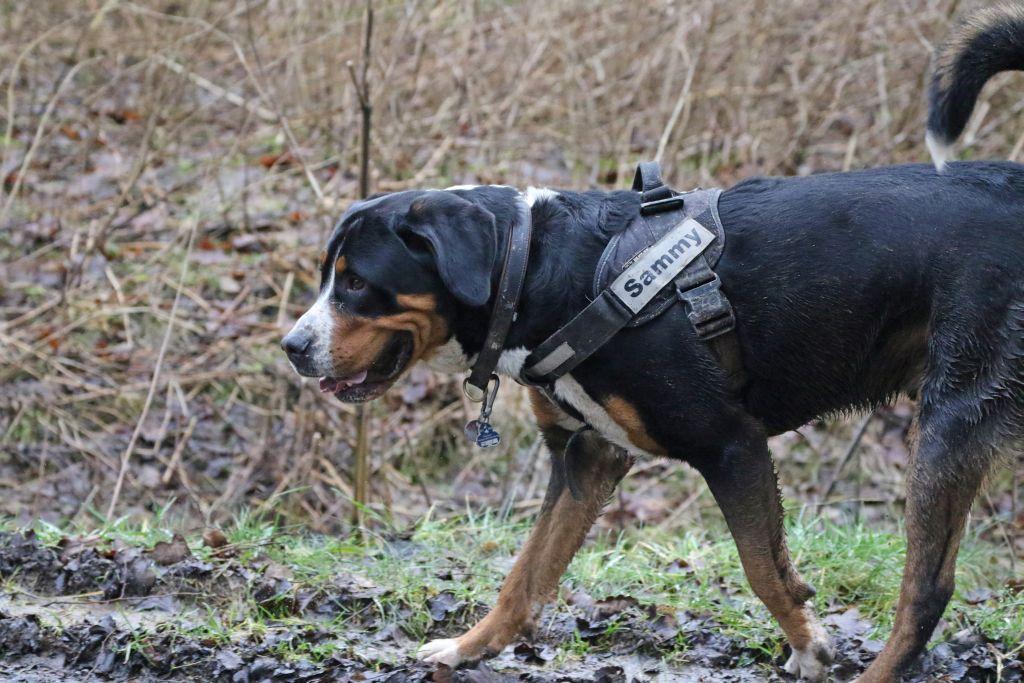 HundefreundeJan201827