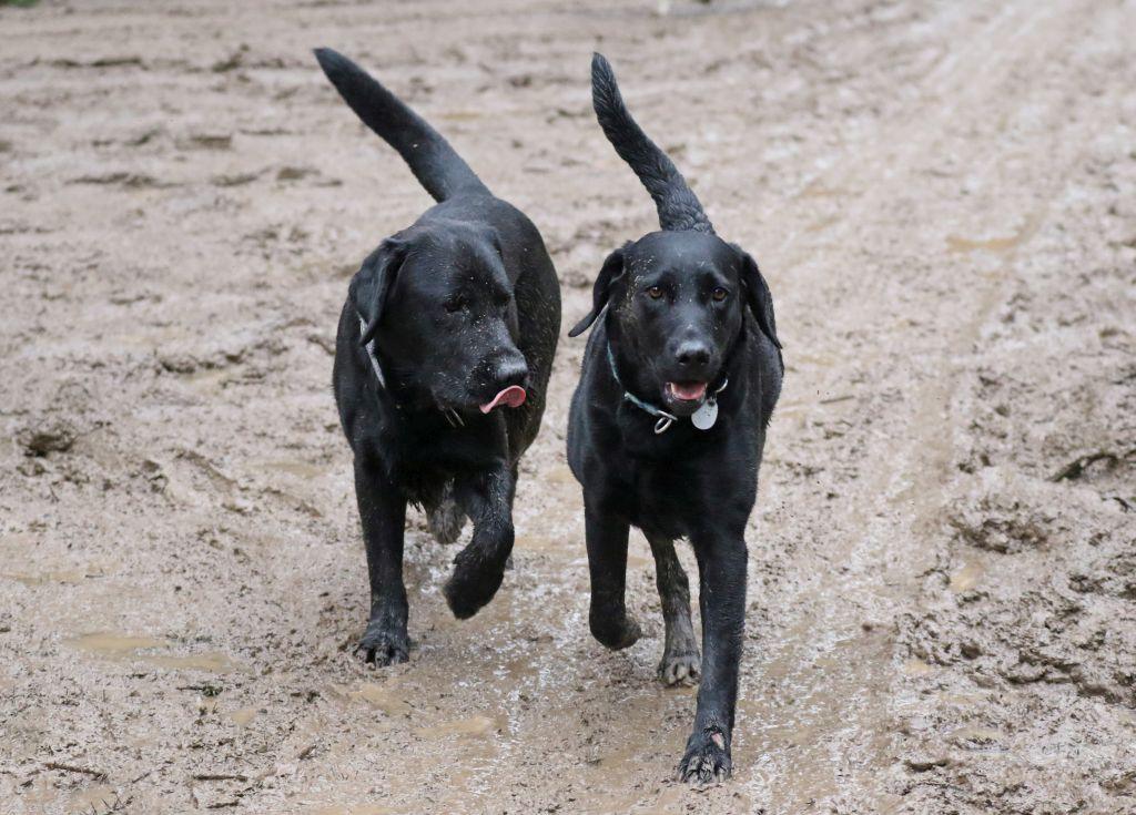HundefreundeJan20184