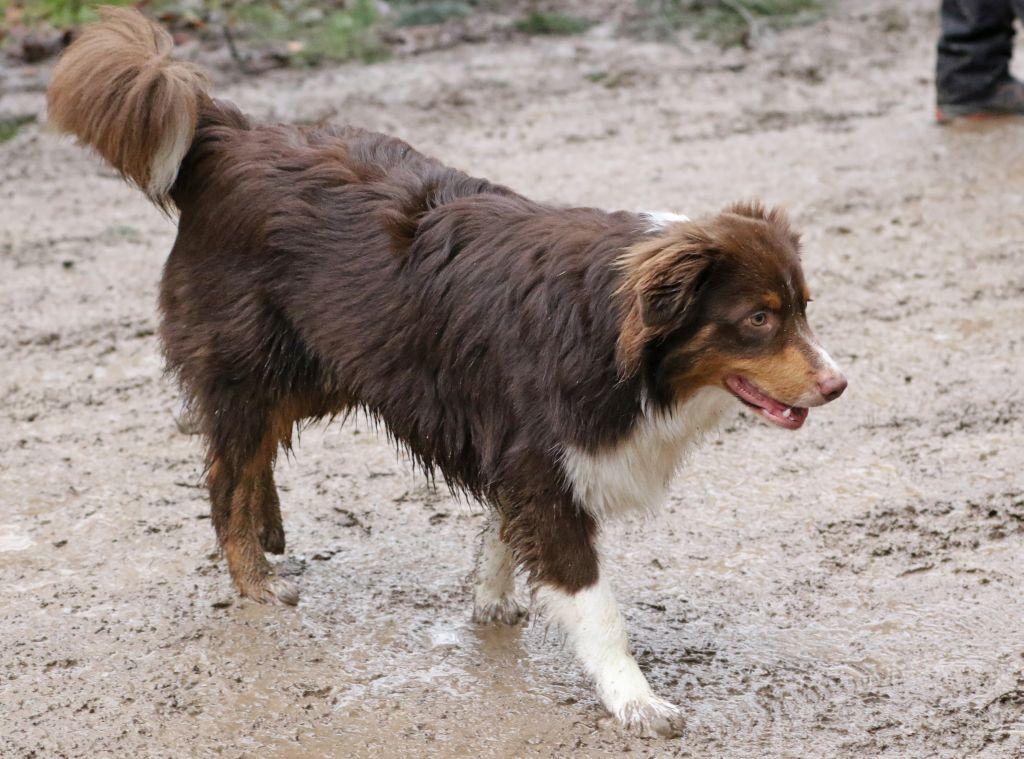 HundefreundeJan20188